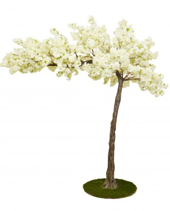 3.2m Cream Canopy Cherry Blossom Artificial Tree -For Hire-