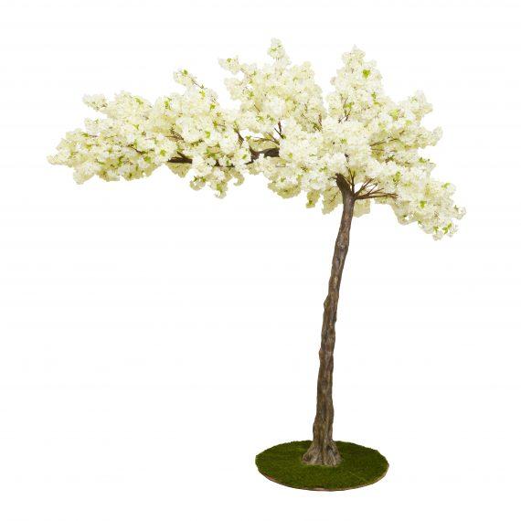 3.2m Cream Canopy Cherry Blossom Artificial Tree -For Hire-