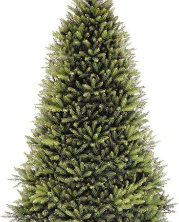 dunhill fir